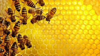 Sweden Honey Wallpaper 1920x1080 Sweden Honey Bees