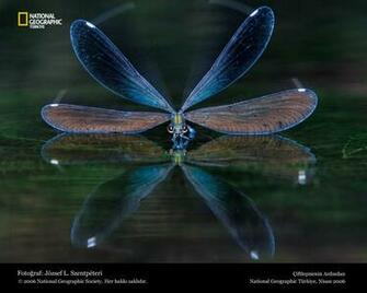 Funny Dragonfly wallpaper for desktop Amazing Wallpapers