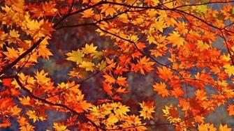 Download Fall Foliage Wallpapers