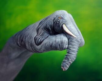 Animal Planet Wallpaper