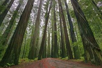 Redwood National Forest Photo Information