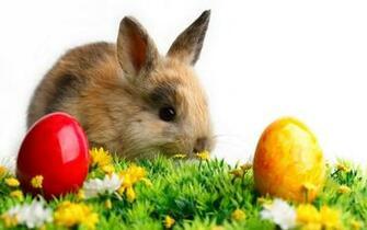 Happy Easter Bunny Wallpaper Wallpupcom