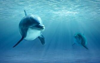 Wallpaper ocean realism dolphins images for desktop section