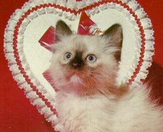 gatito de san valentn fondo de pantalla   ForWallpapercom
