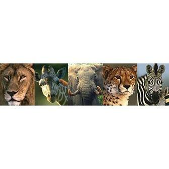 Safari Animal Border   Jungle Greats   Brewster Wallpaper   NGB94603