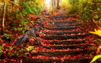 Fall Images Wallpaper   Viewing Gallery