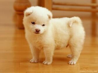 Description Download Cute Puppy WallpaperBackground in 1600x1200 HD