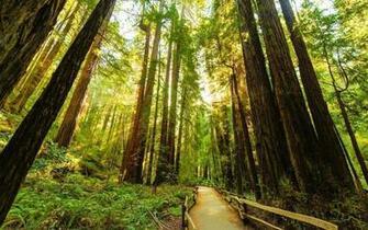 Redwood Desktop Wallpapers   Top Redwood Desktop Backgrounds
