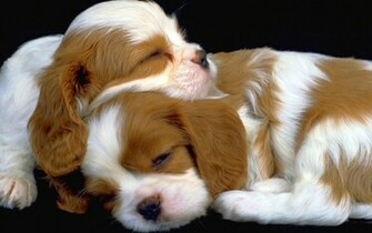 hd puppies pictures puppies images puppy photos puppies wallpapers