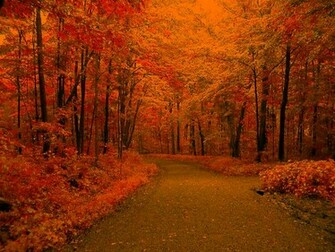 Autumn Scenic Wallpaper   wwwwallpapers in hdcom