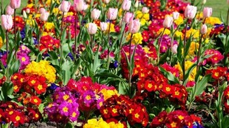 Full Hd Wallpapers Flower HD Wallpapers   ImgHD Browse and