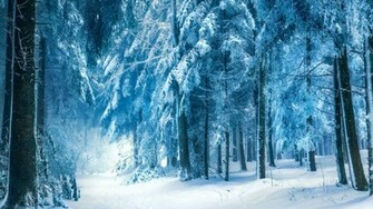 Winter Landscape Snow Forest HD Wallpaper