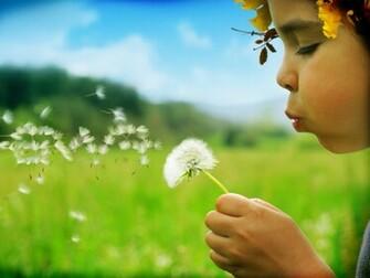 blowing dandelion in the meadow   Kids Wallpapers   Hi Wallpaperscom