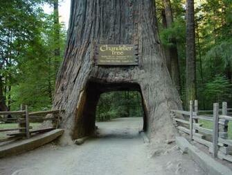 Redwood National Park California Wallpapers Unlimited Redwood