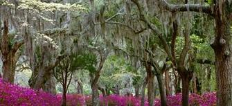 Springtime in Savannah Georgia Wallpaper 1r1w 680x310