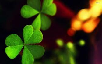 Clover wallpapers HD   429899
