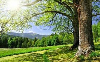 green nature wallpapers in the world modern design 1 on garden design