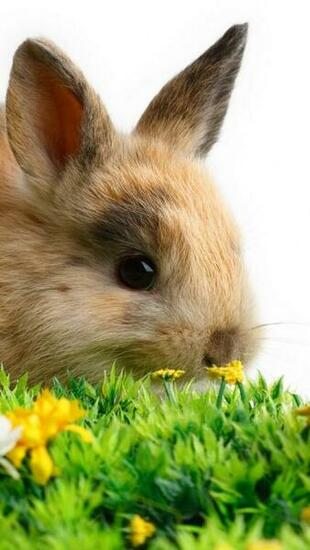 Download Lovely Easter 2013 Bunnies iPhone 5 HD