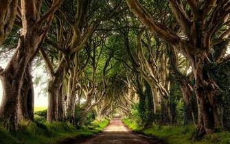 The Dark Hedges Northern Ireland Wallpaper desktop