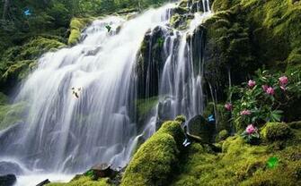 User reviews of Exotic Waterfall Screensaver 10