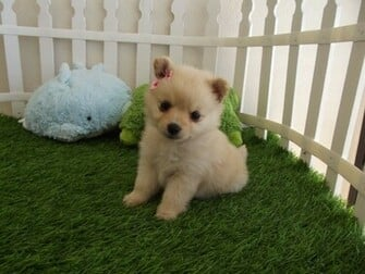 Cute Puppies HD Wallpapers Cute Puppies HD Wallpapers Check out the
