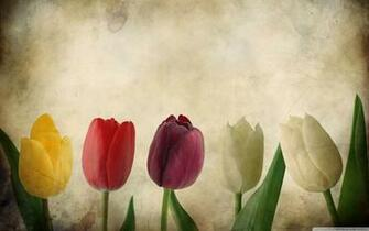 tulips vintage wallpaper flowerwallpaper beautifulflowerjpg