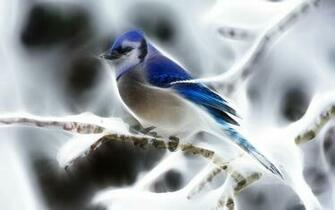 Download Fractalius Blue Jay New Wallpaper Full HD Wallpapers