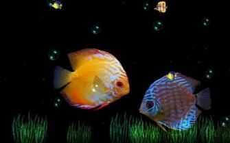 Beauty Of Ocean Animated Wallpaper
