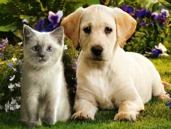 Its HD Animals Funny Wallpapers cute puppies and kittens wallpaper