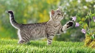 Kitten achtergronden jonge katjes hd kittens wallpapers foto 1jpg