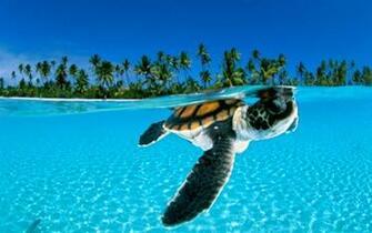 Download Wild animals water desktop photos background wallpapers