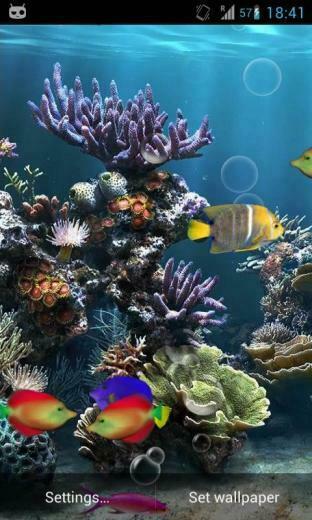 fish aquarium live wallpaper now watch fishes moving in aquarium as