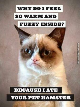 Grumpy feels warm and fuzzy Fun Cat Pictures