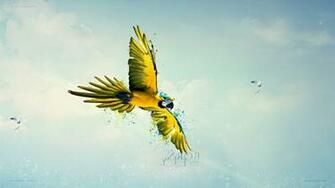 macaws birds sky parrot flying paint splatter Wallpapers HD
