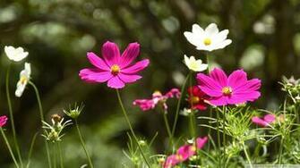 spring flowers hd wallpaper