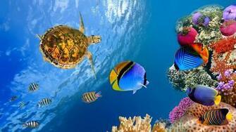 Underwater landscape 4K Ultra HD wallpaper 4k WallpaperNet