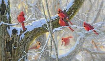 Cardinals birds   Winter Reds Wallpapers   HD Wallpapers 95121