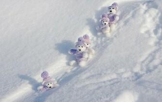 Winter Teddy Bears wallpapers Winter Teddy Bears stock photos