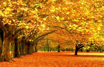 Beautiful Autumn Forest Wallpaper PC 6765 Wallpaper High Resolution