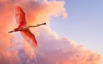 Download Nature Wallpaper wallpaper Pink Bird