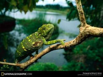 of the Day Picture Photography Wallpapers   National Geographic