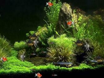 virtual aquarium animated wallpaper desktop wallpapers 270106jpeg