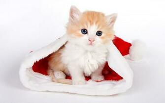 Christmas Animals Wallpapers