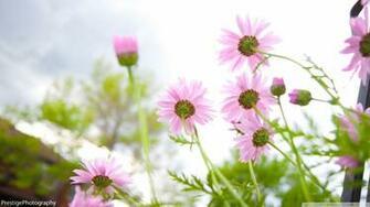 flowers desktop wallpaper HD