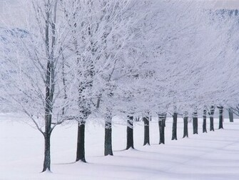 Winter wallpaper snow tree lined Urban Art Wallpaper