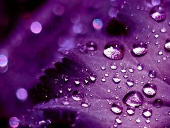 Pics Photos   Pretty Purple Backgrounds Wallpaper