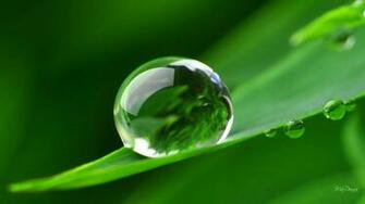 Dew Drops hd wallpapers 3