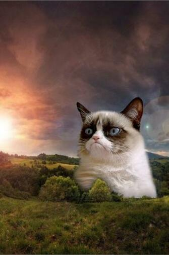 Related Pictures Grumpy Cat