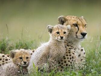 Animals Plannet Hd animal wallpapers