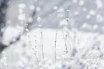 download cute winter wallpaper which is under the winter wallpapers